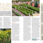 thumbnail of RHS piece on coriander and dill by barbara segall