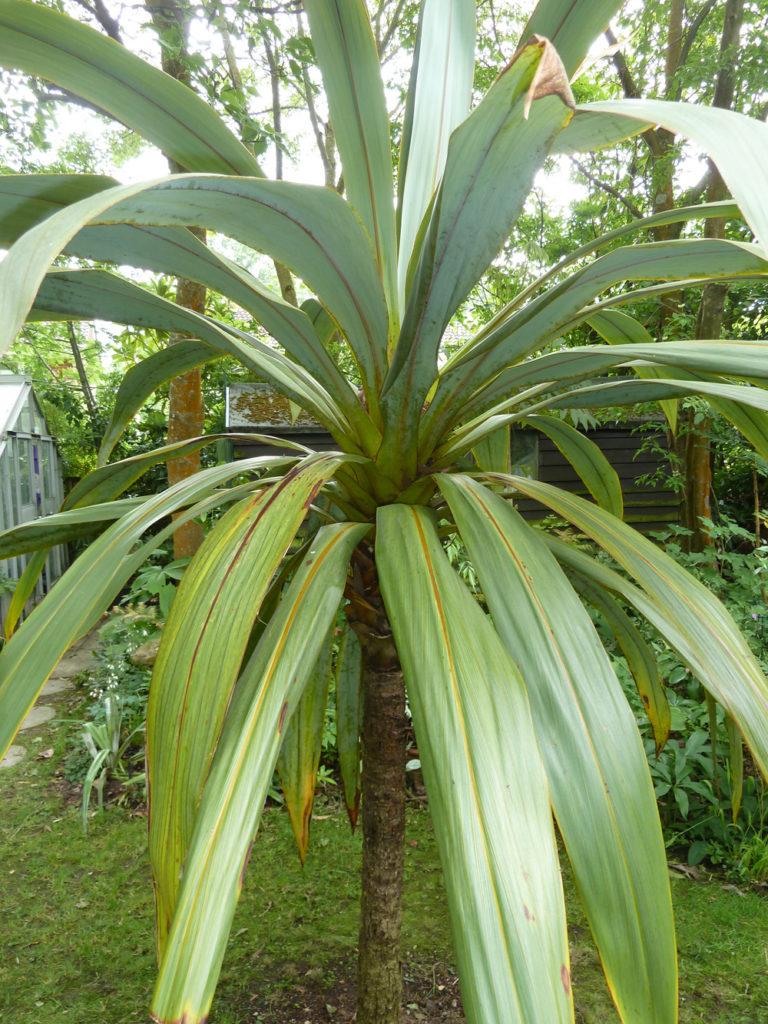 roy lancaster a plantsman in népal