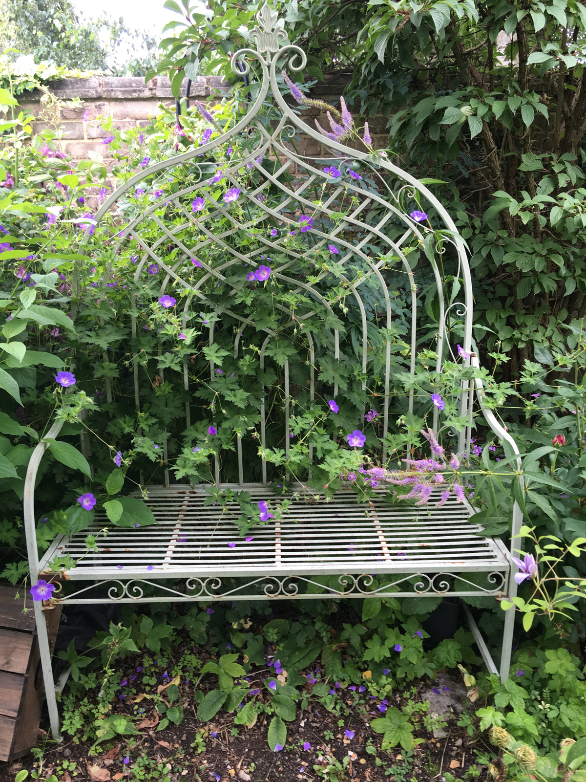 bench surrounded by geranium